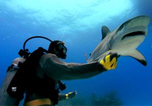 Making Of Sharkwater