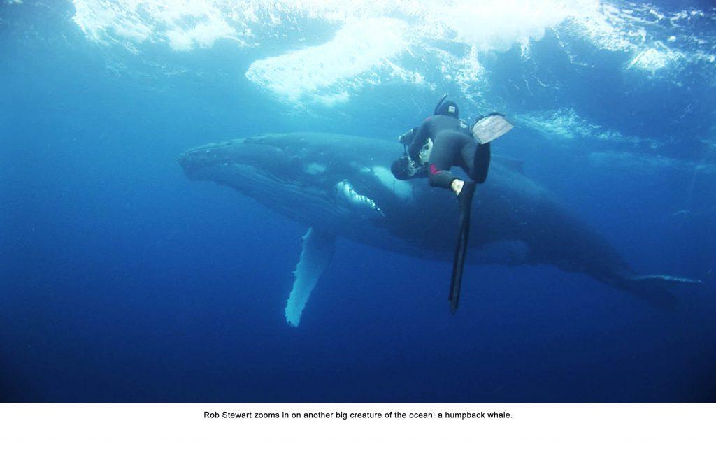 Rob Stewart filming humpback whale
