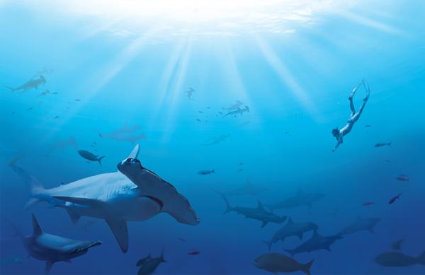 Sharkwater Graphic