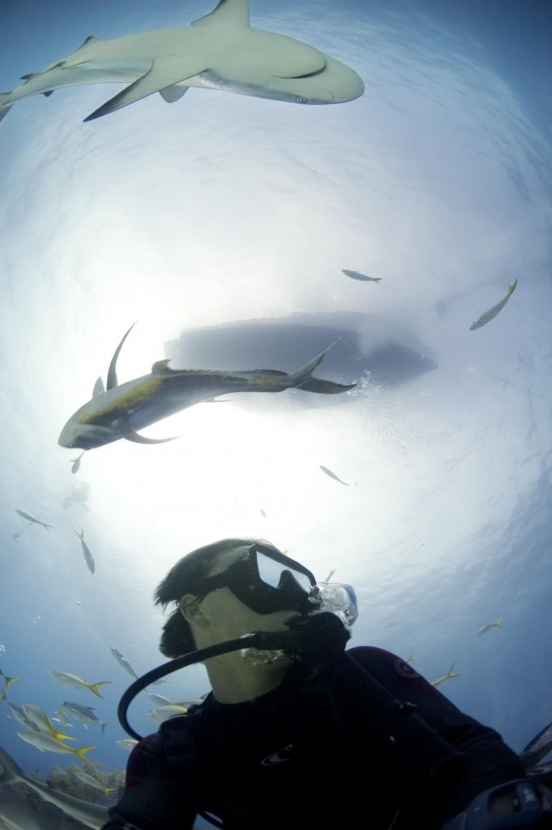 Rob Stewart & Caribbean reef sharks