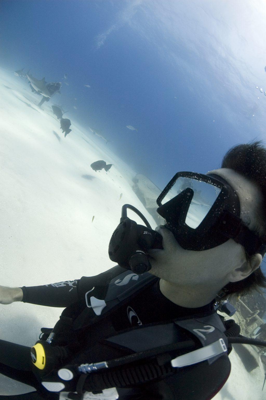 Rob Stewart and Caribbean reef sharks