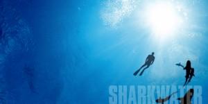 sharkwaterA_1024