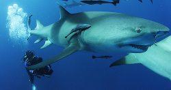Filming Under Water